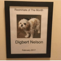 Funny, Roommate, and Girl Memes: Roommate of The Month  Digbert Nelson  February 2017 Congrats Digbert @doggosdoingthings