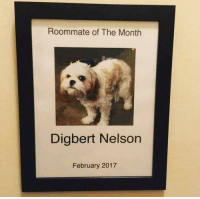 Memes, Roommate, and Hell: Roommate of The Month  Digbert Nelson  February 2017 hell ya, dig ⭐️💫⭐️💫⭐️ @chaos.reigns_
