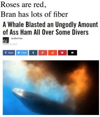 Ass, Bran, and Red: Roses are red  Bran has lots of fiber  A Whale Blasted an Ungodly Amount  of Ass Ham All Over Some Divers  By Mark Hay  January 23, 2015  f Share Tweet t