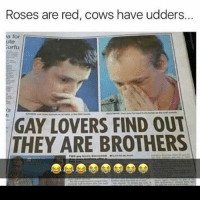 Meme, Memes, and Punisher: Roses are red, cows have udders.  I for  ute  rfu  GAY LOVERS FIND OUT  THEY ARE BROTHERS 😭😭😭😭😭😭😭😭 ( Follow 🔥👣 @the_meme_punisher👣🔥 )