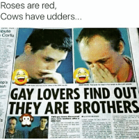 Ash, Memes, and Rose: Roses are red  Cows have udders.  ibute  Corfu  op's  ash  GAY LOVERS FIND OUT  THEY ARE BROTHERS 😂