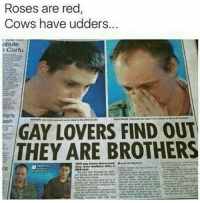 Memes, Rose, and 🤖: Roses are red  Cows have udders.  ributo  Corfu  GAY LOVERS FIND OUT  THEY ARE BROTHERS Oh Gawd.