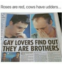 Funny, Cow, and Roses: Roses are red, cows have udders...  ute  Cortu  GAY LOVERS FIND OUT  THEY ARE BROTHERS What 😂😂