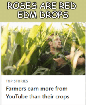 Food, Google, and youtube.com: ROSES ARE RED  EDM DROPS  TOP STORIES  Farmers earn more from  YouTube than their crops Google give us food