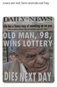 Animals, Funny, and Life: roses are red, farm animals eat hay  DAILYeNEWS  Life has a funny way of sneaking up on you  When you think everything's okay and evarything's going right-PAGE S  OLD MAN, 98  WINS LOTTERY  刂少  DIES NEXI DAY
