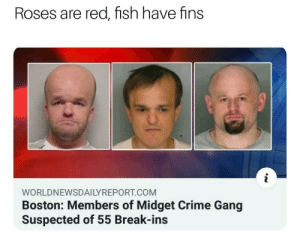 Boston looking pretty lit: Roses are red, fish have fins  WORLDNEWSDAILYREPORT.COM  Boston: Members of Midget Crime Gang  Suspected of 55 Break-ins Boston looking pretty lit