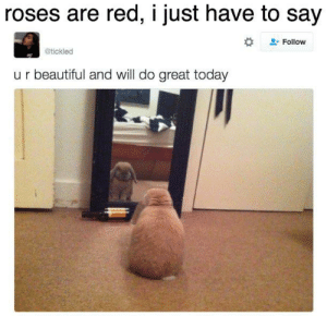 Beautiful, Reddit, and Today: roses are red, i just have to say  Follow  @tickled  ur beautiful and will do great today have a nice day!