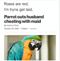 Wow snitch 👀   👉 @highfiveexpert for more amazing posts 🔥: Roses are red  I'm tryna get laid,  Parrot outs husband  cheating with maid  By Natalie O'Neill  October 25, 2016  l 2:34pm I Updated  @high five expert Wow snitch 👀   👉 @highfiveexpert for more amazing posts 🔥