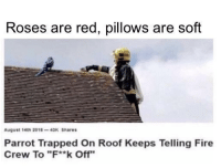 "Fire, Red, and Parrot: Roses are red, pillows are soft  August 14th 2018-43K Shares  Parrot Trapped On Roof Keeps Telling Fire  Crew To ""F**k Off"" Roses are red, i hate myself"
