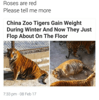 Memes, 🤖, and Zoo: Roses are red  Please tell me more  China Zoo Tigers Gain Weight  During Winter And Now They Just  Flop About On The Floor  7:33 pm 08 Feb 17 Same. | For more @aranjevi