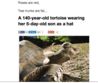 <p>That&rsquo;s one nice hat.</p>: Roses are red,  Tree trunks are fat...  A 140-year-old tortoise wearing  her 5-day-old son as a hat  A Lke <p>That&rsquo;s one nice hat.</p>