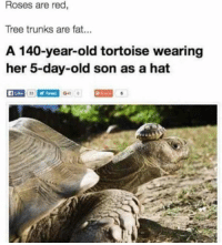 Cute, Funny, and Trunks: Roses are red,  Tree trunks are fat..  A 140-year-old tortoise wearing  her 5-day-old son as a hat  f Like  Gu 23 Funny & Cute Pet Pics Of The Day 5 – 8 – 2018