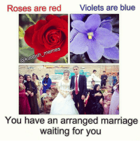 Roses are red  Violets are blue  memes  @Kurdish-  You have an arranged marriage  waiting for you kurd kurdish kurdistan instakurd kurdishmemes