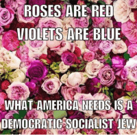 Rose Are Red Violets Are Blue: ROSES ARE RED  VIOLETS ARE BLUE P  WHAT AMERICA NEEDS IS A  DEMOCRATIC SOCIALIST jEW