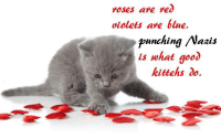 xoxoxox: roses are red  violets are blue.  punching Nazis  is what good  kittehs do. xoxoxox