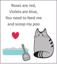 Memes, 🤖, and Page: Roses are red  Violets are blue  You need to feed me  and scoop my poo For more cute pics LIKE us at The Purrfect Feline Page