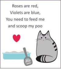 feed me: Roses are red  Violets are blue  You need to feed me  and scoop my poo