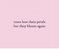 Roses, They, and Bloom: roses lose their petals  but they bloom again