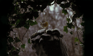roseydoux:The Secret Garden (1993): roseydoux:The Secret Garden (1993)