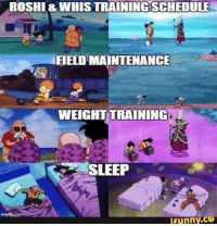 Funny, Memes, and One Piece: ROSHI&WHISTRAININGSCHEDULE  FIELD MAINTENANCE  WEIGHT TRAINING  SLEEP  funny COI Some Things Never Change.  ~ One Piece The New Era