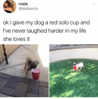 Cute, Life, and Memes: rosie  @dollpxrts  ok I gave my dog a red solo cup and  lve never laughed harder in my life  I've never laughed harder in my life  she loves it She's so cute