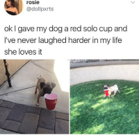 Life, Memes, and Rosie: rosie  @dollpxrts  ok I gave my dog a red solo cup and  I've never laughed harder in my life  she loves it i should be packing rn but I'm not. oh well