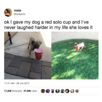 Life, Memes, and Rosie: rosie  @dollpxrts  ok I gave my dog a red solo cup and I've  never laughed harder in my life she loves it  1:41 AM-28 Jun 2017  17,258 Retweets 47,095 Likes圛國!  1200 I aspire to find this much joy in anything