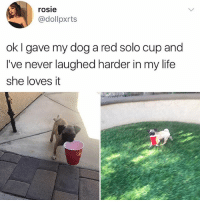 Life, Memes, and Rosie: rosie  @dollpxrts  ok I gave my dog a red solo cup and  I've never laughed harder in my life  she loves it 😂❤️🐶Cute