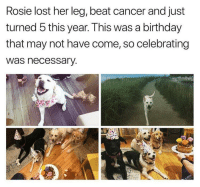 "Birthday, Lost, and Rosie: Rosie lost her leg, beat cancer and just  turned 5 this year. This was a birthday  that may not have come, so celebrating  was necessary <p>Best Birthday Ever! via /r/wholesomememes <a href=""http://ift.tt/2A8Y8zF"">http://ift.tt/2A8Y8zF</a></p>"