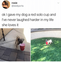 Life, Memes, and Rosie: rosie  rosie  @dollpxrts  ok I gave my dog a red solo cup and  I've never laughed harder in my life  she loves it His face while he trots is everything