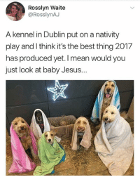 Af, Cute, and Jesus: Rosslyn Waite  @RosslynAJ  A kennel in Dublin put on a nativity  play and I think it's the best thing 2017  has produced yet. I mean would you  just look at baby Jesus. Cute AF