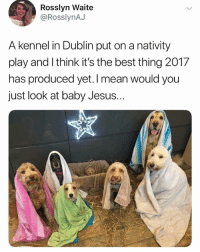 This. Is. Everything. Twitter rosslynAJ: Rosslyn Waite  @RosslynAJ  A kennel in Dublin put on a nativity  play and I think it's the best thing 2017  has produced yet. I mean would you  just look at baby Jesus. This. Is. Everything. Twitter rosslynAJ