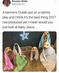 Omg 😂😂 (@_theblessedone): Rosslyn Waite  @RosslynAJ  A kennel in Dublin put on a nativity  play and I think it's the best thing 2017  has produced yet. I mean  just look at baby Jesus.  would you Omg 😂😂 (@_theblessedone)