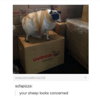 Pizza, Weird, and Imgur: roup  UniGroup  imgur.com/gallery/iw7 UO  sofa pizza:  your sheep looks concerned That's a weird looking sheep