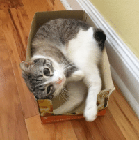 """Memes, 🤖, and New: Roux is taking """"if I fits, I sits"""" to a whole new level. 😏😆"""