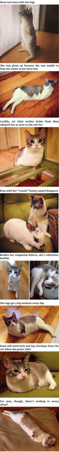"""<p>The Two-Legged Cat.</p>: Roux was born with two legs  She was given up because she was unable to  bury her waste in her litter box  Luckily, vet clinic worker Jackie Deak Akey  adopted her as soon as she saw her  Roux with her """"cousin"""" bunny named Kangaroo  Besides her congenital defects, she's otherwise  healthy  Her legs get a big workout every day  Roux will need back and leg checkups from the  vet when she grows older  For now, though, there's nothing to worry  about! <p>The Two-Legged Cat.</p>"""