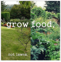 Food, Memes, and How To: row food  not lawns I need to learn how to grow food :) repost @farmacyuk