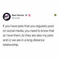 Love, Memes, and Social Media: Roxi Horror  @roxiqt  If you have pets that you regularly post  on social media, you need to know that  a) I love them, b) they are also my pets  and c) we are in a long distance  relationship Post 1906: y the hELL havent u followed @kalesaladanimals yet