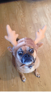 Funny, Spirit, and The Holiday: Roxy getting in the holiday spirit!