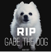 He borked at me when no other doggo would💔 ripgabethedog: RP  GABE THE DOG  XXXX-2017 He borked at me when no other doggo would💔 ripgabethedog