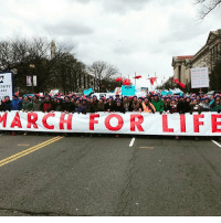 Conservative, Prolific, and Right Wing: RSITY  ARY  Lif  MARCH FOR Very successful march for life today. I wasn't there but someone sent this in. Thank you all for your submissions! Y'all are wonderful folks! abortionismurder marchforlife abortion prolife liberals libbys democraps liberallogic liberal ccw247 conservative constitution presidenttrump nobama stupidliberals merica america stupiddemocrats donaldtrump trump2016 patriot trump yeeyee presidentdonaldtrump draintheswamp makeamericagreatagain trumptrain maga Add me on Snapchat and get to know me. Don't be a stranger: thetypicallibby Partners: @theunapologeticpatriot 🇺🇸 @too_savage_for_democrats 🐍 @thelastgreatstand 🇺🇸 @always.right 🐘 TURN ON POST NOTIFICATIONS! Make sure to check out our joint Facebook - Right Wing Savages Joint Instagram - @rightwingsavages Joint Twitter - @wethreesavages Follow my backup page: @the_typical_liberal_backup