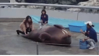 RT @AMAZlNGNATURE: Walrus works out his belly: RT @AMAZlNGNATURE: Walrus works out his belly