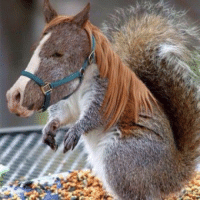 RT @AnimalsEdits: Squirrel Horse: RT @AnimalsEdits: Squirrel Horse