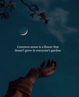 RT @BitterTrueWords: Common sense is a.. https://t.co/A87zS9R0g6: RT @BitterTrueWords: Common sense is a.. https://t.co/A87zS9R0g6