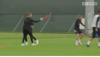 Memes, Chicken, and Success: RT @footballdailyuk: The secret to England's success. Training with a rubber chicken 😂🤔 https://t.co/4HmiEShx7w