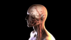 RT @learnthngs: This is how a blood clot in the brain is removed using a catheter: https://t.co/W8tjeSOuzI: RT @learnthngs: This is how a blood clot in the brain is removed using a catheter: https://t.co/W8tjeSOuzI