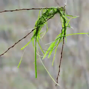 RT @learnthngs: This is how a Weaver Bird builds its nest: https://t.co/TYLGT2DGxt: RT @learnthngs: This is how a Weaver Bird builds its nest: https://t.co/TYLGT2DGxt