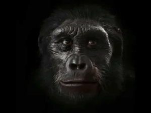 RT @learnthngs: This is how the human face evolved: https://t.co/9LWrdcb5ao: RT @learnthngs: This is how the human face evolved: https://t.co/9LWrdcb5ao