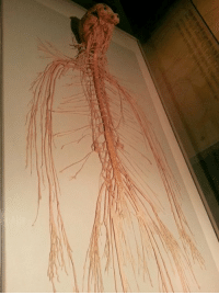 RT @MedicaIGuide: When you only look at the nervous system of the human body. #medicalguide https://t.co/ClI3ZQ7JGE: RT @MedicaIGuide: When you only look at the nervous system of the human body. #medicalguide https://t.co/ClI3ZQ7JGE