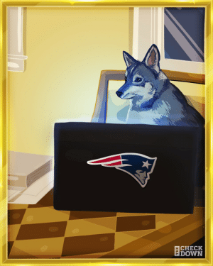 RT @thecheckdown: The real MVP of the 2020 draft 🙌🐕 @Patriots https://t.co/Qm36cxiGTU: RT @thecheckdown: The real MVP of the 2020 draft 🙌🐕 @Patriots https://t.co/Qm36cxiGTU